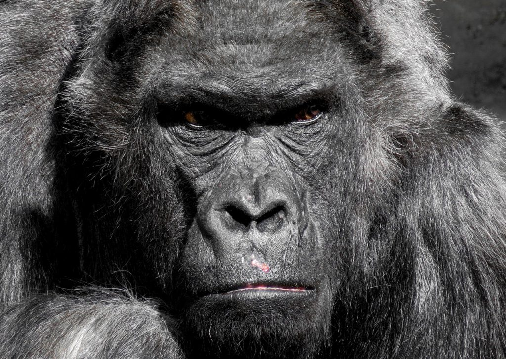 Every Planet of the Apes Movie that you can watch right now